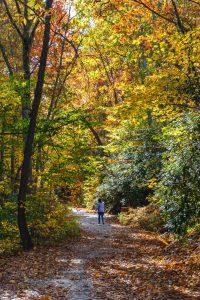 Road to Grassy Creek Falls