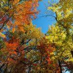 Fall Color on Mackey Mountain
