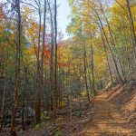 Fall Color on the Catawba Falls Trail