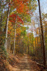 Fall Color on the Catawba Falls Trail