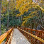 Catawba Falls Trail Bridge