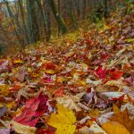 Colorful Leaves on the Bald Knob Ridge Trail