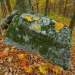 Boulder and Fall Color on Bald Knob Ridge