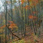 Bald Knob Ridge Trail Fall Color