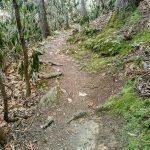 Shut-In Trail Roots