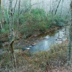Bent Creek from Campground Connector