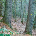 Deerfield Loop Pines