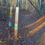 Pine Tree and Deerfield Loops