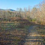 Pine Tree Loop Trail Meadow