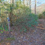 Pine Tree Explorer Junction