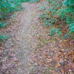 Pine Tree Loop Trail
