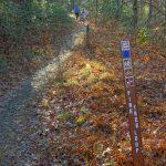 Start of Pine Tree Loop Trail