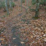 Chestnut Cove Trail Rocks