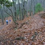 Chestnut Cove Trail Switchbacks