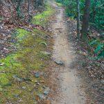 Explorer Loop Mossy Trail