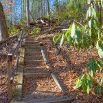 Steps on the Andy Cove Nature Trail