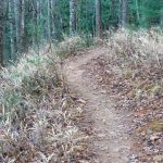 Grassy Road Trail Hill Cane