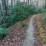 Grassy Road Trail
