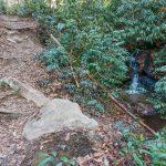 Sycamore Cove Trail Cascade