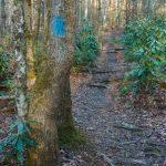 Sycamore Cove Trail Blue Blaze