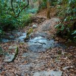 Sycamore Cove Trail Creek Crossing #4