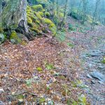 Bridges Camp Gap Trail Tree and Moss