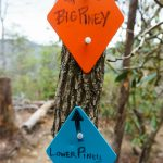 Lower Piney/Big Piney Trail Signs