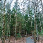 Jacob Fork Picnic Area