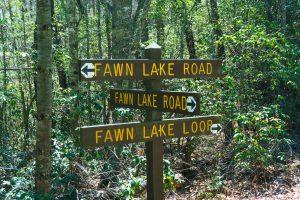 Fawn Lake Loop and Road