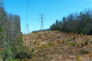 Powerlines on Fawn Lake Road
