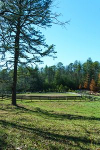 Pine and Horse Pasture