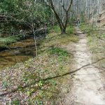 Coontree Loop Trail and Creek