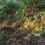 Trail on Snowball Ridge