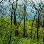 A Forest of Green below Bare Branches