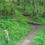 Mountains to Sea Trail in Beetree Gap