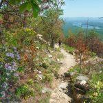 Mountain Laurel and Views on Shortoff Mountain