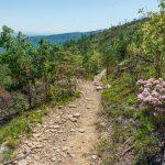 Open Areas along Shortoff Mountain Trail