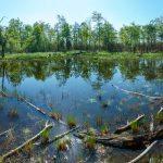 Pond on Shortoff Mountain
