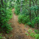 Young's Ridge, or Kitsuma, Trail Across the Ridge