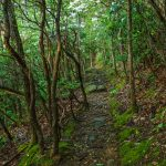Rocks, Moss, and Mountain Laurel