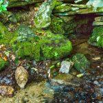 Upper Spring at Rattlesnake Lodge