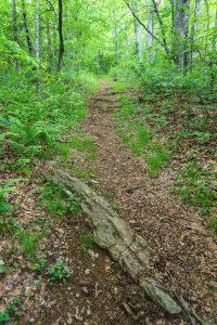 Mountains to Sea/Shut In Trail on Ridge to Ferrin Knob
