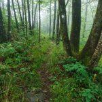 Foggy Ridgeline near Lane Pinnacle