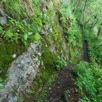 Narrow Trail Along the Bluffs