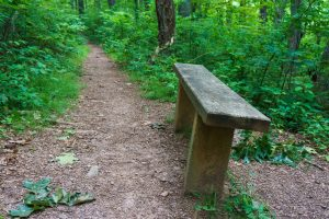 Bench Beside the Mountains to Sea Trail