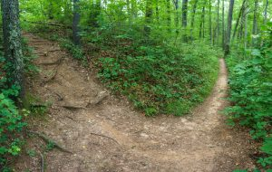 Spur Path to Old Road