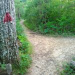 Red Blazed Haw Creek Overlook Path