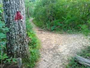 Red Blazed Haw Creek Overlook Path