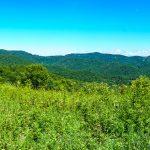 Meadow on the Appalachian Trail