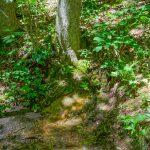 Spring beside the Appalachian Trail